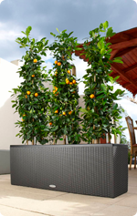 Orangen im TRIO Cottage