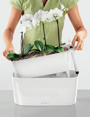 in voller bl te tipps und tricks zur orchideenpflege. Black Bedroom Furniture Sets. Home Design Ideas