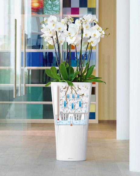 lechuza orchideen pflanzen f r nassen boden. Black Bedroom Furniture Sets. Home Design Ideas