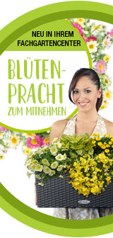 VDG-Händler-Aktion: Blütenpracht zum Mitnehmen